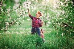 La mujer del bebé en primavera cultiva un huerto, los dientes de león florecientes Fotos de archivo libres de regalías