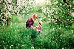 La mujer del bebé en primavera cultiva un huerto, los dientes de león florecientes Imagen de archivo libre de regalías