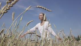 La mujer delgada joven con un pelo justo largo en una camisa blanca y vaqueros va a trav?s del campo del trigo maduro al d?a sole almacen de metraje de vídeo