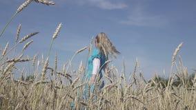 La mujer delgada joven feliz con un pelo justo largo en un vestido azul gira en el campo del trigo maduro en d?a soleado del vera metrajes