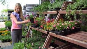 La mujer elige las flores de la petunia en la tienda del cuarto de niños de la planta de jardín