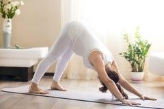La mujer embarazada que hace yoga boca abajo del perro presenta en casa Fotografía de archivo