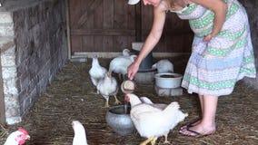 La mujer embarazada vierte el agua en el pote para el pollo tomatero en parada Imagenes de archivo