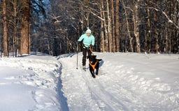 La mujer en el esquí va para un perro corriente. Fotografía de archivo