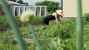 La mujer en sombrero y guantes de paja quita malas hierbas de la cama del jardín, escardando los guisantes en el jardín almacen de video