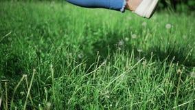 La mujer en tejanos golpea abajo los dientes de león y la alta hierba en el parque en el día de verano soleado, muchacha engaña a almacen de metraje de vídeo