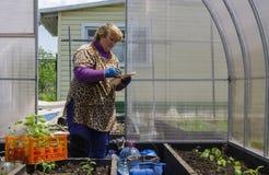 La mujer en una residencia del verano en el invernadero guarda los expedientes de almácigos plantados Fotografía de archivo libre de regalías