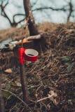 La mujer envuelve un árbol del injerto con una cinta aislante en el jardín para detener la humedad en ella en primer imágenes de archivo libres de regalías