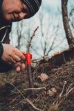 La mujer envuelve un ?rbol del injerto con una cinta aislante en el jard?n para detener la humedad en ella en primer imágenes de archivo libres de regalías