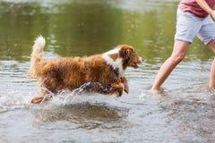 La mujer está corriendo con un perro en el agua Fotos de archivo
