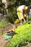 La mujer está cultivando un huerto imagen de archivo