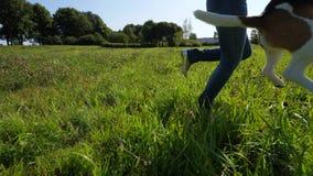 La mujer feliz corre en el campo, juego con el perro del beagle, perrito salta para coger el juguete almacen de metraje de vídeo