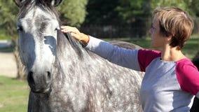 La mujer feliz se coloca cerca de un caballo manchado en un césped en el slo-MES almacen de video