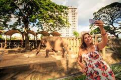 La mujer feliz toma la foto contra elefante en parque zoológico Fotos de archivo