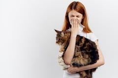 La mujer hermosa en un fondo del blanco sostiene un gato, mapache de Maine, alergias a los animales domésticos Imagenes de archivo