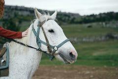 La mujer hermosa joven está caminando con un caballo en las montañas Fotografía de archivo