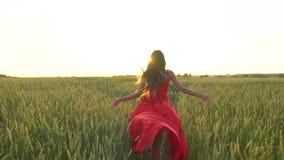 La mujer hermosa joven feliz en vestido rojo arma el funcionamiento aumentado en campo de trigo en el verano de la puesta del sol