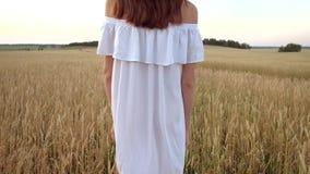 La mujer hermosa va al campo del trigo de oro maduro metrajes