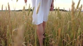 La mujer hermosa va al campo del trigo de oro maduro almacen de metraje de vídeo