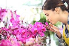 La mujer huele las flores en el jardín, fragancia de orquídeas imagen de archivo