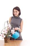 La mujer irriga la orquídea Foto de archivo libre de regalías