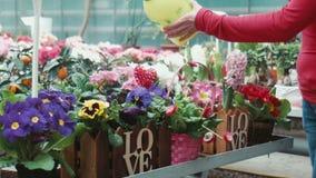 La mujer irriga las flores en el invernadero almacen de video