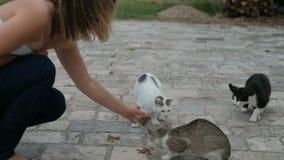 La mujer joven alimenta gatos hambrientos en el pavimento de piedra en la ciudad almacen de video