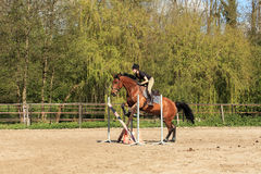La mujer joven con un caballo marrón salta un obstáculo Fotografía de archivo