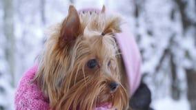 La mujer joven cría para arriba el pequeño perro en suéter en parque del invierno Adolescente y un perro para un paseo al aire li almacen de video