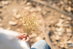 La mujer joven de la visión trasera que sostiene la flor blanca del ramo que se sienta en sea Imagen de archivo