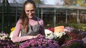 La mujer joven en el invernadero con las flores comprueba un pote del crisantemo Florista de sexo femenino sonriente atractivo en almacen de metraje de vídeo