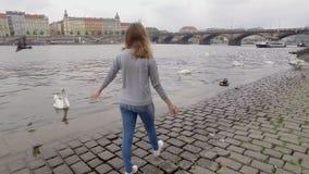 La mujer joven está caminando en el terraplén de la ciudad en Praga en el día de primavera nublado, mirando los cisnes blancos almacen de video