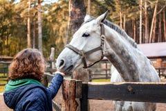 La mujer joven hermosa está alimentando el caballo con las manos Foto de archivo libre de regalías