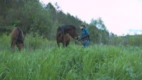 La mujer joven hermosa está alimentando su caballo con la hierba Una muchacha con un diente de león alimenta dos caballos con el  almacen de video