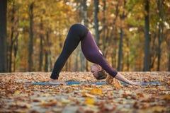 La mujer joven hermosa practica el perro boca abajo del asana de la yoga en la cubierta de madera en el parque del otoño Imagen de archivo libre de regalías