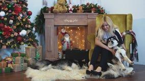 La mujer joven intenta poner un husky siberiano en la butaca por una chimenea acogedora en adornada para el sitio de la Navidad almacen de video