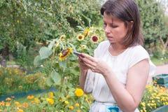 La mujer joven mira el teléfono móvil, comprueba la red social contra el contexto de girasoles fotografía de archivo libre de regalías