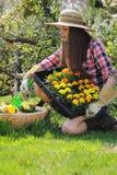 La mujer joven planta las flores en un florero del jardín Foto de archivo