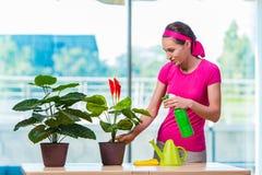 La mujer joven que toma el cuidado de las plantas caseras imagen de archivo