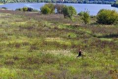 La mujer joven siega la hierba en un campo en la orilla del río Foto de archivo libre de regalías