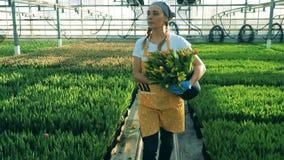 La mujer joven sostiene un cubo por completo de tulipanes, trabajador del invernadero Invernadero del cuarto de niños de las flor almacen de metraje de vídeo