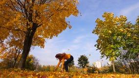 La mujer lanza para arriba en hojas de arce amarillas brillantes del aire metrajes