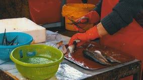 La mujer limpia y corta pescados frescos en mercado de pescados almacen de video
