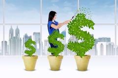 La mujer maneja el crecimiento del árbol del dinero Imagen de archivo libre de regalías