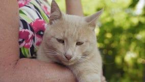 La mujer mayor del primer sostiene el gato rojo en las manos almacen de metraje de vídeo