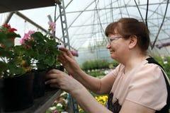 La mujer mayor elige las flores Fotos de archivo