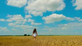 La mujer morena joven linda con el pelo largo hermoso en los sundress cortos blancos del verano camina en campo de trigo de oro almacen de video