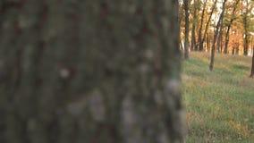 La mujer mullida grande atractiva linda en bosque amarillo del otoño, sostiene una cesta con hojas caidas y una manzana jugosa, m almacen de video