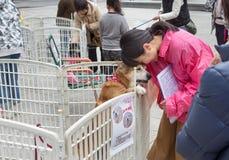 La mujer ofrece un perro para la adopción Imagen de archivo libre de regalías