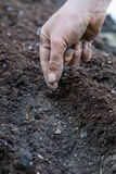 La mujer planta una semilla Foto de archivo